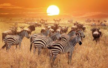 5 сафари в Танзании, которые обязательно нужно посетить во время предстоящей поездки в Африку